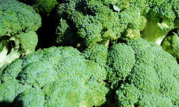 Broccoli – A No Fat Super Food to include in all LCHF, Keto Diets